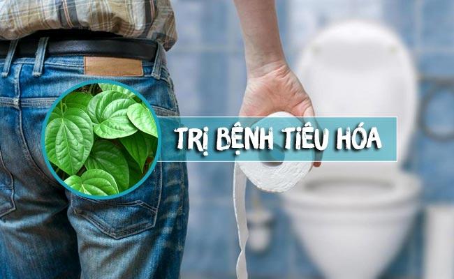 Công dụng lá trầu không trong điều trị bệnh đường tiêu hóa